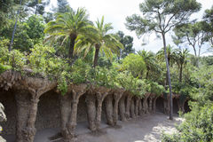 Tropical plants in garden. Barcelona Stock Photography