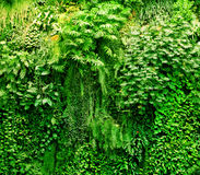 Tropical plants green background. Royalty Free Stock Images