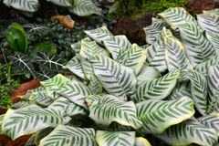 Tropical plants Royalty Free Stock Photos