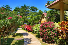 Tropical plants in the grounds of the hotel, Beach and trees, Phra Ae Beach, Ko Lanta, Thailand Stock Images