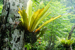 Tropical plants growing at rainforest Royalty Free Stock Photo