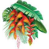 Tropical plants and Heliconia Royalty Free Stock Photography