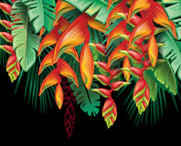 Tropical plants Heliconia and flowers Stock Photos