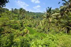 Tropical plants on a hill slope, Indonesia. Bali Stock Photos