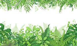 Tropical Plants  Horizontal Border. Hand drawn branches and leaves of tropical plants. Vivid line horizontal floral pattern. Green two-sided seamless border Royalty Free Stock Photo