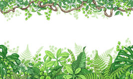 Tropical Plants  Horizontal Border. Hand drawn branches and leaves of tropical plants. Vivid line horizontal floral pattern. Green two-sided seamless border Stock Photography