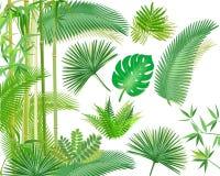 Tropical plants illustration Stock Photos