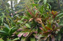 Free Tropical Plants In A Cloud Forest Enviroment Stock Images - 125027004