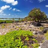 Tropical plants on Island Gabriel.Mauritius. Stock Photos