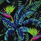 Tropical plants in the jungle night. Exotic tropical plants and flowers in the jungle night. Seamless vector illustration pattern on a black background palm Stock Photos