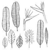 Tropical plants. Leaves and flowers.Vector sketch  illustration. Stock Image