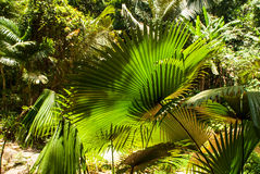 Tropical plants leaves Royalty Free Stock Images