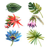 Tropical plants leaves watercolor sketch icons Stock Images
