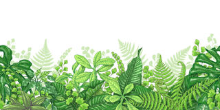 Tropical Plants Line Horizontal Border Stock Photo