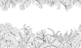 Tropical Plants Line Horizontal Pattern Stock Photography