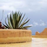 Tropical plants on Mirador de Los Valles Stock Photography