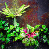 Tropical plants at mossy wall Royalty Free Stock Image