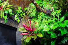 Tropical plants at mossy wall Stock Photos