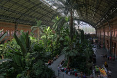 Tropical plants in the old Atocha railway train station in Madrid with tropical plants Royalty Free Stock Photos