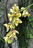 Tropical plants - orchid stock photo