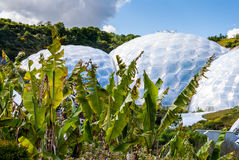 Tropical plants outside geodesic biome domes at the Eden Project Royalty Free Stock Photo