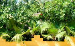 Tropical plants and palms. Tropical green plants and palms Royalty Free Stock Photography