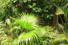 Tropical Plants Stock Photo
