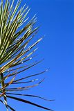Tropical plants. Tropical plant with spikes in clear blue skies Stock Image