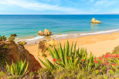 Tropical plants on Praia da Rocha beach Royalty Free Stock Images