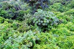 Tropical Plants Puerto Rico Stock Photography