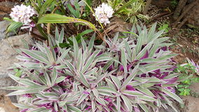 Tropical plants. Purple and green plants Stock Photo