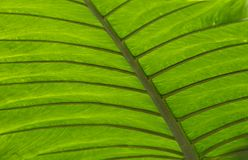 Tropical plants at renowned Fredrick Meijer Garden Stock Photography
