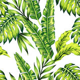 Tropical plants seamless background. Fashion painting jungle wallpaper of exotic tropic plants of banana palm leaves. Print Hawaii seamless vector pattern on Stock Photography