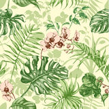 Tropical plants seamless background. Stock Photography