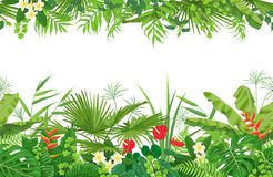 Tropical Plants Seamless Border Royalty Free Stock Image