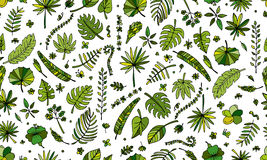 Tropical plants, seamless pattern Stock Images