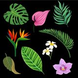 Tropical plants set, exotic leaves and flowers, vector Ilustrations on a black background. Tropical plants set, exotic leaves and flowers, colorful vector Stock Photography