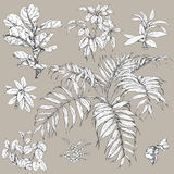 Tropical Plants Set. Hand drawn branches and leaves of tropical plants. Black and white floral  set  on gray background. Ficus, palm fronds sketch Royalty Free Stock Images