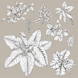 Tropical Plants Set. Hand drawn branches and leaves of tropical plants. Black and white floral  set isolated on gray background. Ficus, dieffenbachia, liana Stock Photo
