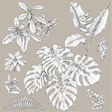 Tropical Plants Set. Hand drawn branches and leaves of tropical plants. Black and white floral  set isolated on gray background. Synadenium, monstera, fern Royalty Free Stock Photos