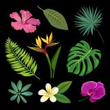 Tropical plants set, palm leaves and exotic flowers, vector Ilustrations on a black background. Tropical plants set, palm leaves and exotic flowers, colorful Royalty Free Stock Photos
