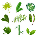 Tropical plants set. Vector illustration of green leaves Stock Images