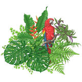 Tropical Plants  and  Sitting Macaw Royalty Free Stock Photography