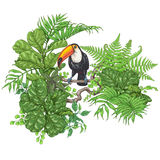 Tropical Plants  and  Sitting Toucan Royalty Free Stock Photos