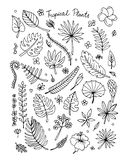 Tropical plants, sketch for your design Royalty Free Stock Photos