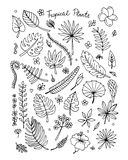Tropical plants, sketch for your design Stock Photos
