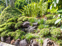 Tropical plants with stone Stock Image