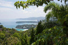 Tropical plants on top of the mountain. Tropical bushes against the backdrop of the sea and the bay stock photo