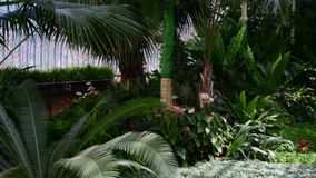 Tropical plants and tree in the botanic garden. Botanic greenhouse. Interior of glasshouse. Tropical background. 4K. Tropical plants and tree in the botanic stock footage