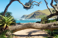Tropical plants and trees on beach Stock Images